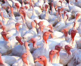 Птичий грипп в США