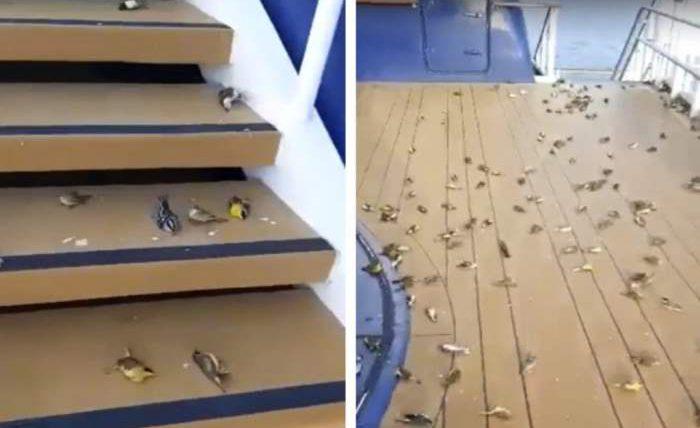 Сотни птиц были обнаружены мертвыми