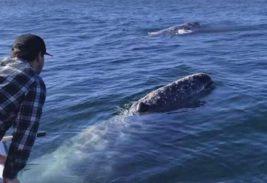 бухта и киты