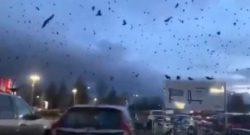 Тысячи ворон накрыли небо над некоторыми городами США
