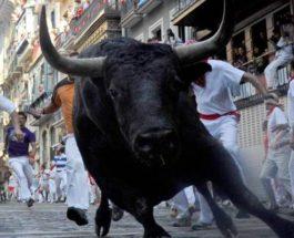 забег быков