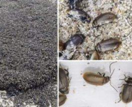 мертвые жуки