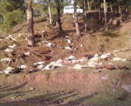 Более 100 овец и коз были убиты