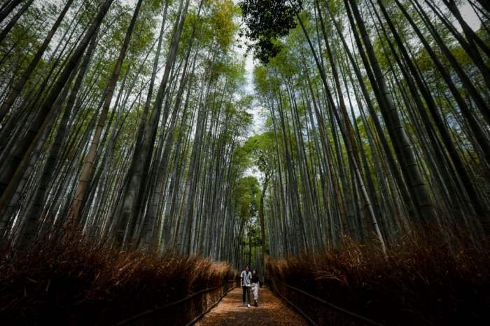 Пара прогуливается в бамбуковой роще