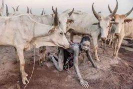 Поклоняющееся скоту африканское племя