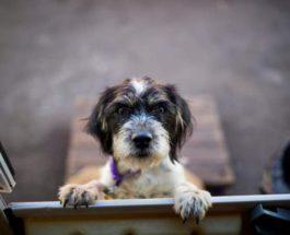 Собака из цирка Биг Кид
