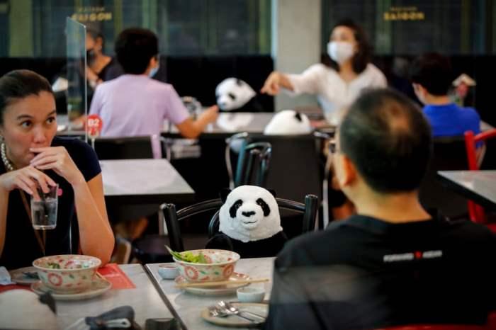 Чучело панды