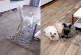 кошка и кролики