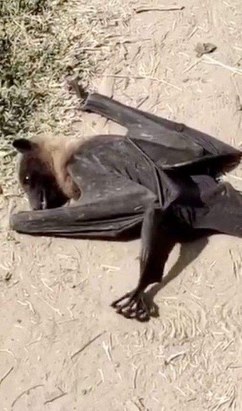 летучие мыши смерть индия