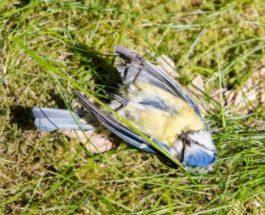 мертвые птицы германия