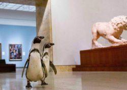 Очаровательные пингвины отправляются на экскурсию в художественный музей США
