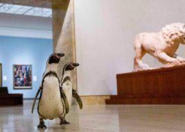 музей пингвины