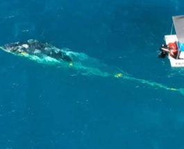 спас кита