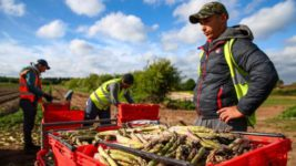 украинцы едут спасать урожай в Европе