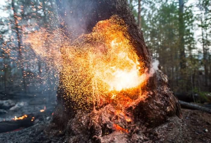 В лесном пожаре в республике Саха горит дерево