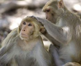 Десятки обезьян сбежали