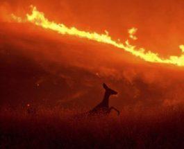 Олень бежит от пламени