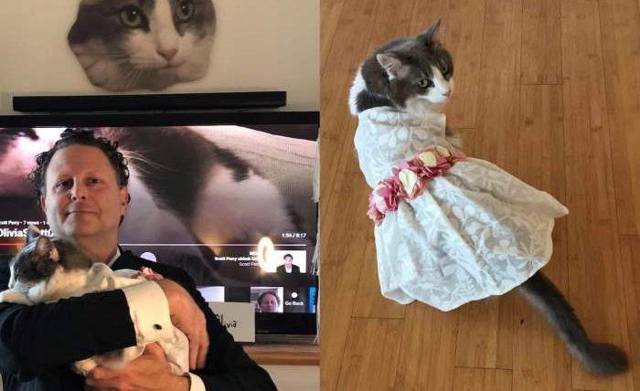 женился на кошке