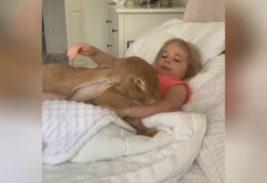 кролик и девочка
