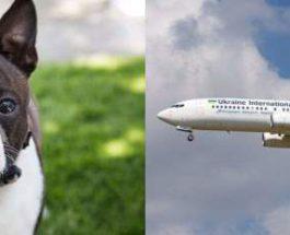мертвые щенки украинские авиалинии