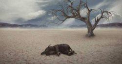 Начало шестого массового вымирания видов было подтверждено учеными
