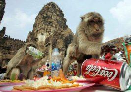 Лоп Бури обезьяны Таиланд