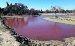 В Парагвае озеро стало красным