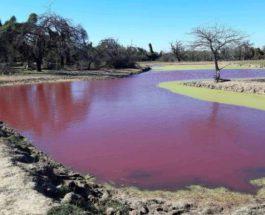 Парагвай,озеро,красное озеро