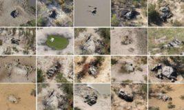 вымирание слонов