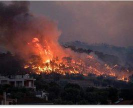 греция лесные пожары