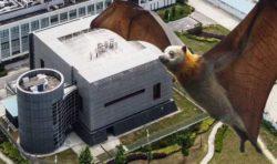 Китайская тайна: короновирус-убийца найденный в фекалиях летучих мышей был отправлен в секретную лабораторию Ухань в 2012 году