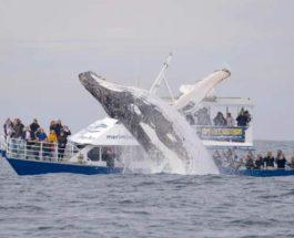 кит выпрыгнул