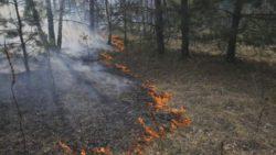 Сотни пожарных борются с лесным пожаром в Украине
