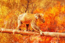 пожары австралия