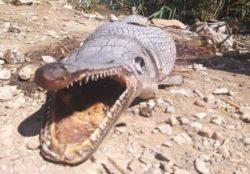 Паника: у плотины на Кипре нашли странное существо с множеством зубов (ФОТО)