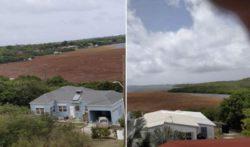 Водоросли саргассум — настоящее стихийное бедствие для Карибского бассейна