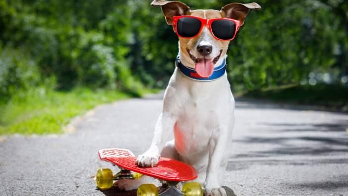 собака скейт