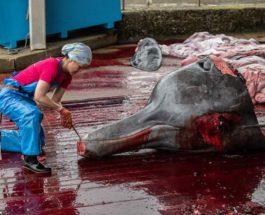 убийство китов в японии