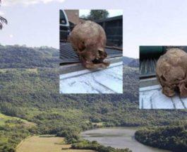 череп существа