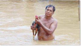 Камерун,Таиланд,наводнения,