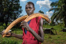 Конго,браконьеры,