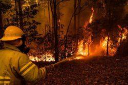 Тысячи гектаров леса в Алжире уничтожены пожаром
