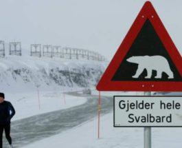 белый медведь убил