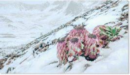 китай снег