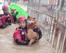 китай собаки наводнение