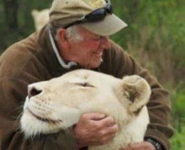 львы,