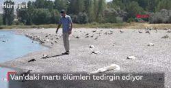 В Турции нашли мертвыми тысячи чаек