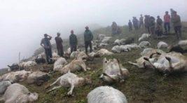 молния непал овцы