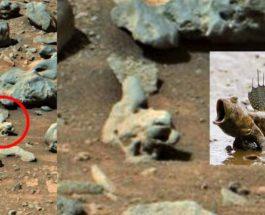 рыба на марсе