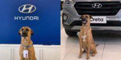 Собака стала продавцом-консультантом в автосалоне HYUNDAI